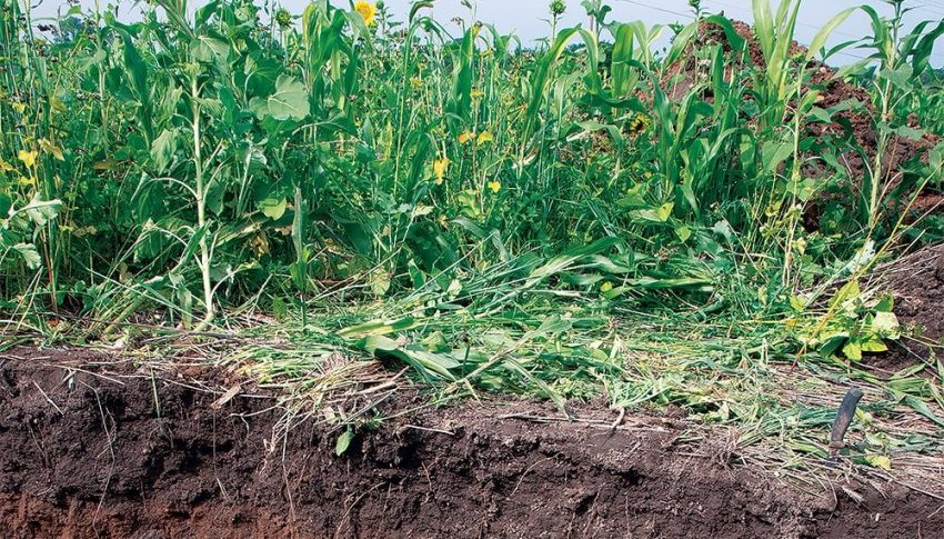 Soil Health and What AgWiki Can do to Help.
